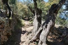 Camí de Castelló