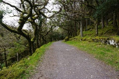 Old Kenmare Road