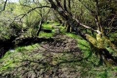 River Caragh
