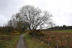 Garadhban Forest